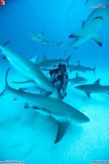blue requins